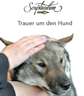 Image Result For Zitate Hund Bester Freund Englisch
